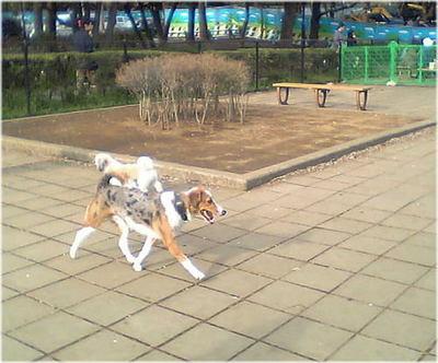 2007年駒沢ランで写したよその子