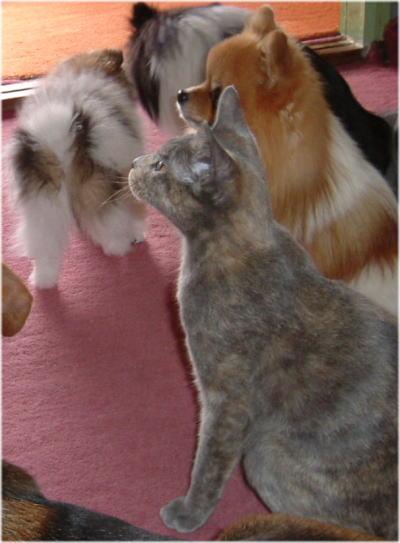 猫でさえオスワリ