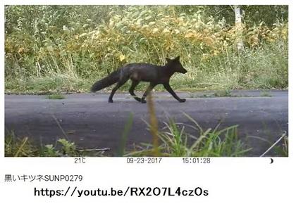 foxblack.jpg