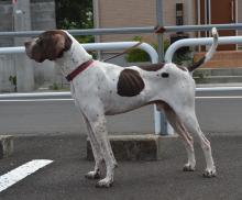 ONE保護犬 竹兵衛
